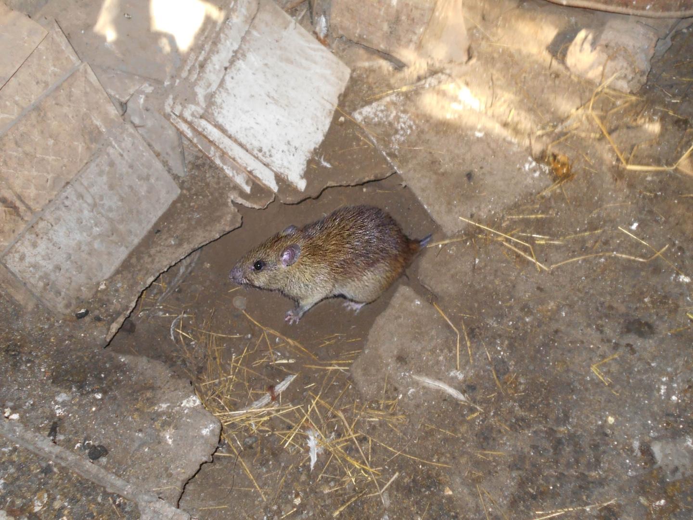 случай норы крыс картинки ячеек