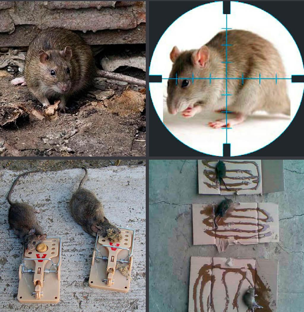 картинки вредная еда с крысами и мышами видите